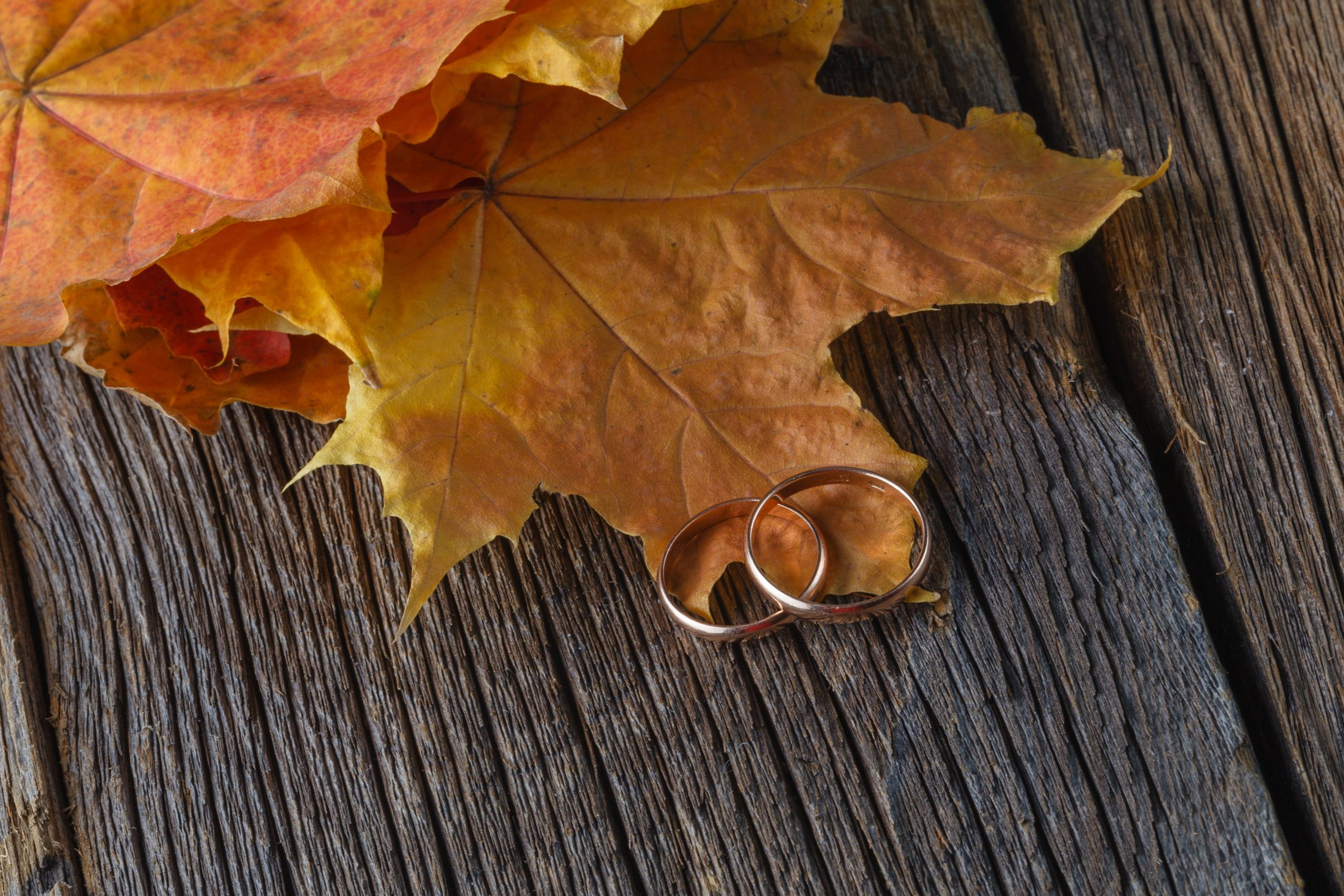 The Romance of Fall